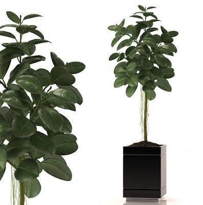 盆栽, 植物, 现代