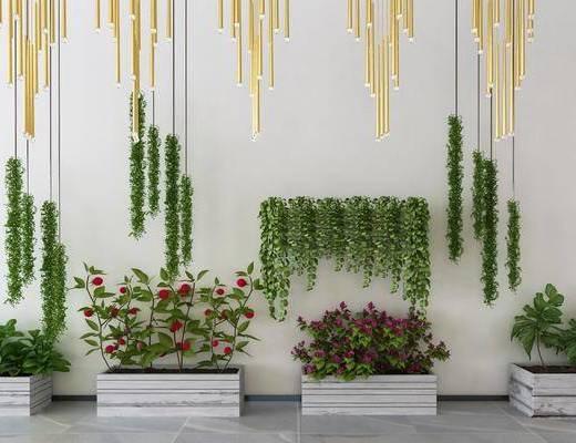 植物盆栽, 绿植植物, 吊灯, 花瓶花卉, 现代
