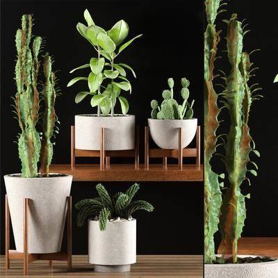 盆栽, 仙人掌, 花盆, 花架, 组合, 植物, 花卉, 现代