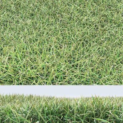 现代草坪组合, 现代, 草坪, 草地