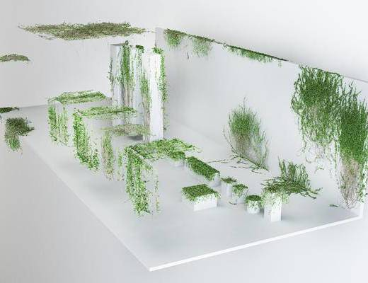 爬墙植物, 绿植, 爬墙虎, 攀藤