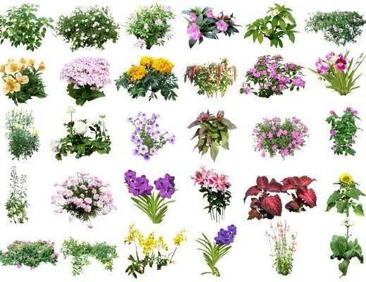 地被植物, 花草绿植, 花卉