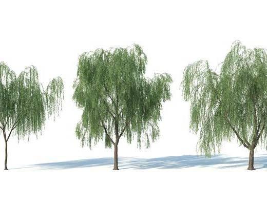現代, 樹, 樹木, 植物