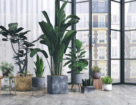 绿植盆栽, 盆栽组合, 盆栽, 北欧