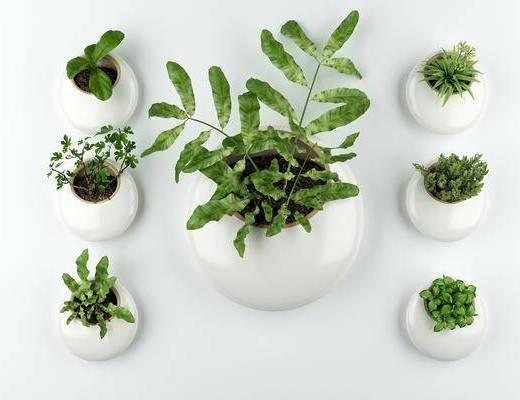 绿植, 盆栽