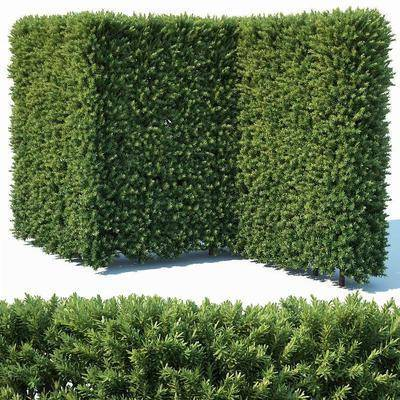籬笆綠籬, 灌木, 綠植植物, 現代