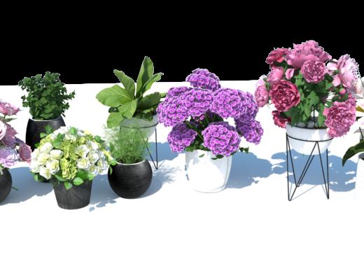 花卉组合, 植物, 盆栽