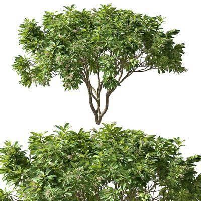現代, 樹木, 擺件
