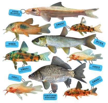 现代, 鱼, 模型