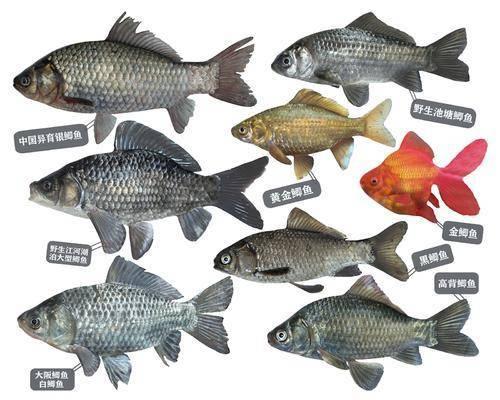 动物, 鱼类