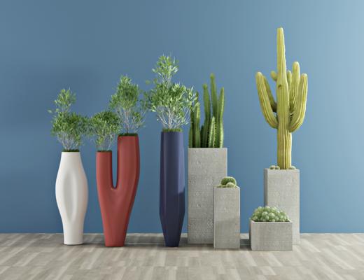 现代绿植, 室内盆栽, 仙人掌, 植物, 花草