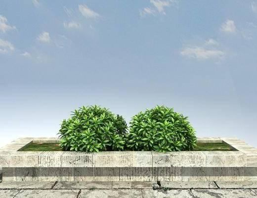 大树, 古树, 老树, 景观, 绿化