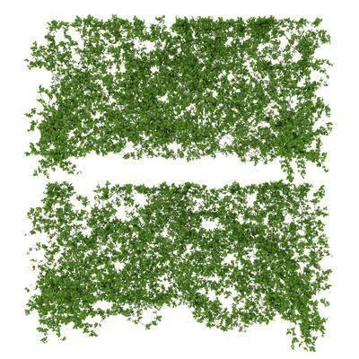 植物, 藤蔓, 现代