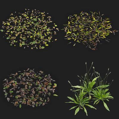 花草, 植物, 绿植, 现代植物