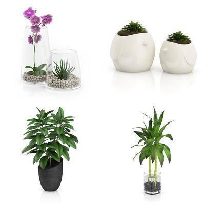 花瓶, 花卉, 盆栽, 植物, 绿植, 现代