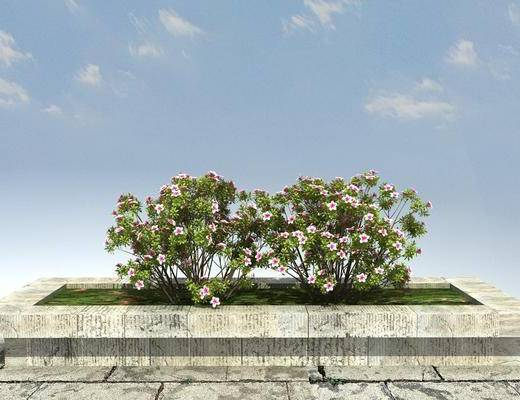 景观, 植物, 绿化