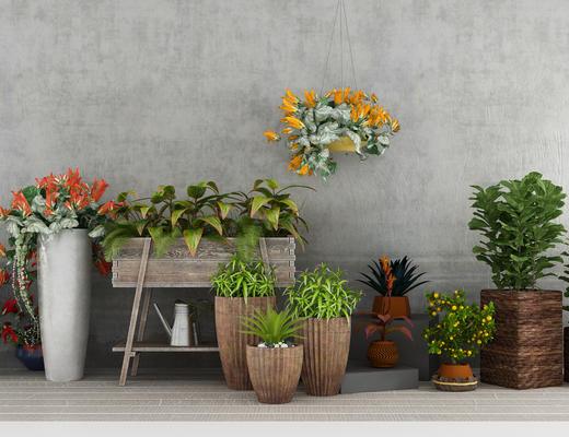 盆栽, 植物, 绿植, 吊篮