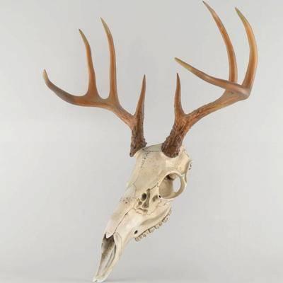 鹿头, 摆件, 墙饰, 挂件, 现代