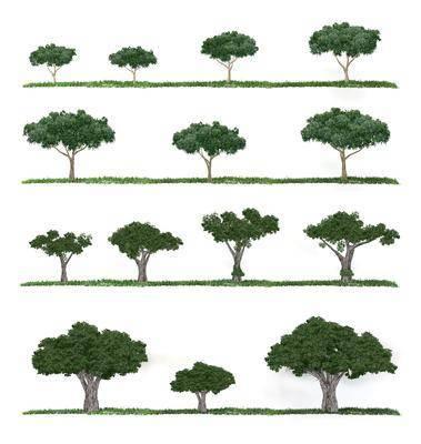 树木, 植物, 现代树木, 户外, 户外树木, 现代