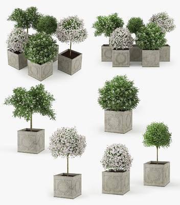 植物, 盆栽, 花草, 现代