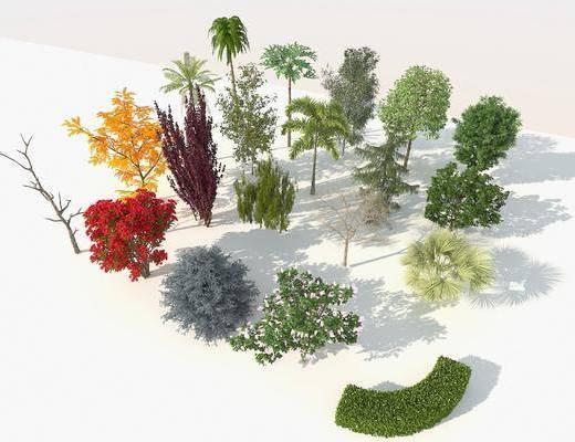 景觀樹, 樹木, 綠植植物, 四季樹, 樹木組合, 現代