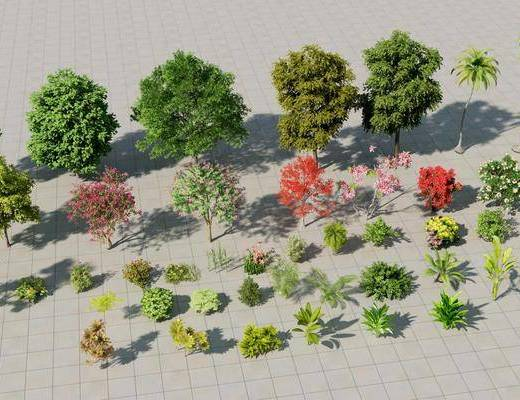 灌木丛, 椰子树, 花草树木