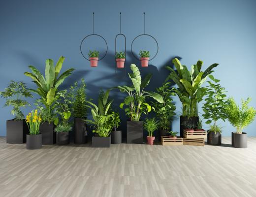 现代观音竹芭蕉盆栽, 绿植, 植物, 花盘, 吊兰