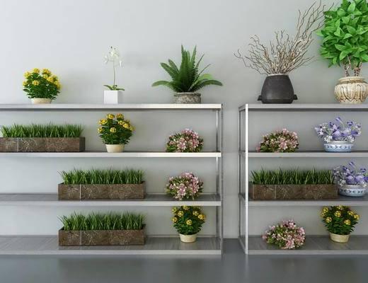 植物, 盆栽, 现代植物盆栽, 现代, 绿植