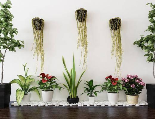 植物, 盆栽, 墙饰, 现代