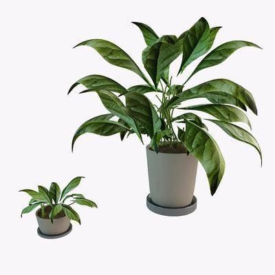植物盆栽, 现代