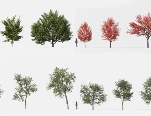 現代, 植物, 樹木, 單體