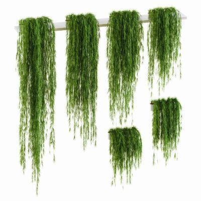 植物垂柳, 藤蔓, 現代