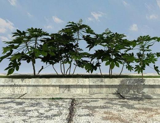 景观, 绿化, 植物, 组合