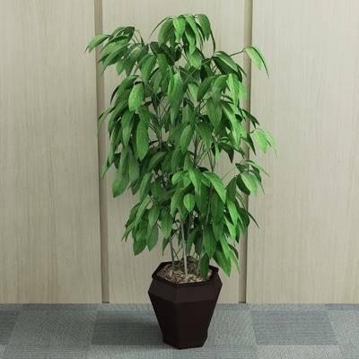 植物, 盆栽, 现代植物盆栽, 绿植, 现代