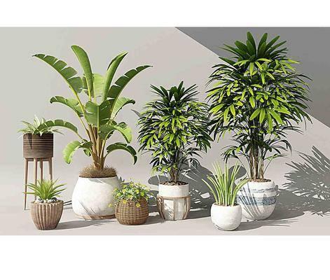 绿植盆栽, 花艺植物, 植物花草, 现代
