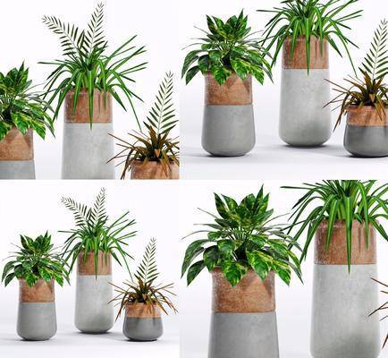 现代盘栽, 植物, 盘栽, 花盆, 现代