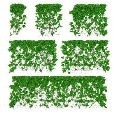 藤蔓, 綠植植物, 現代
