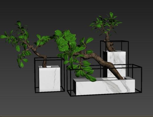 摆件组合, 植物, 装饰品
