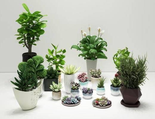 多肉植物, 植物绿植, 盆栽组合, 北欧