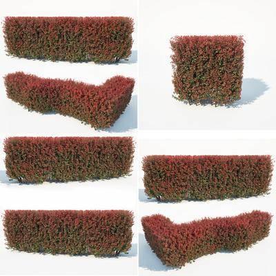 灌木绿篱, 绿植植物, 现代