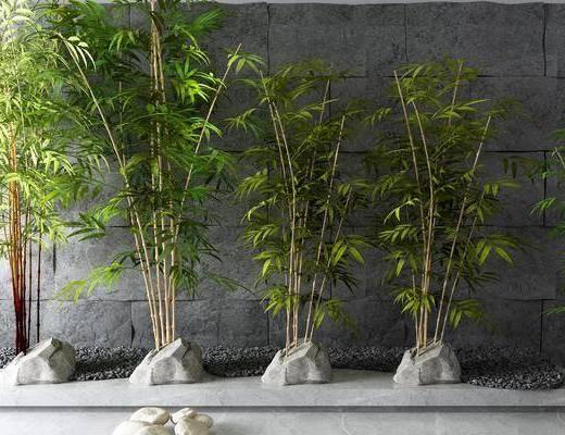文化石, 竹子, 植物