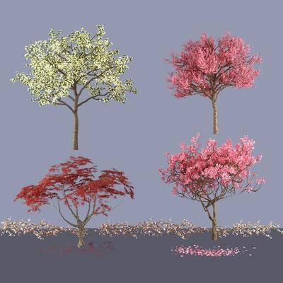 白兰花树, 红枫树, 樱花树, 树, 景观树