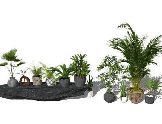 盆栽, 植物, 植物组合