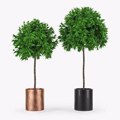 盆栽, 现代盆栽, 植物