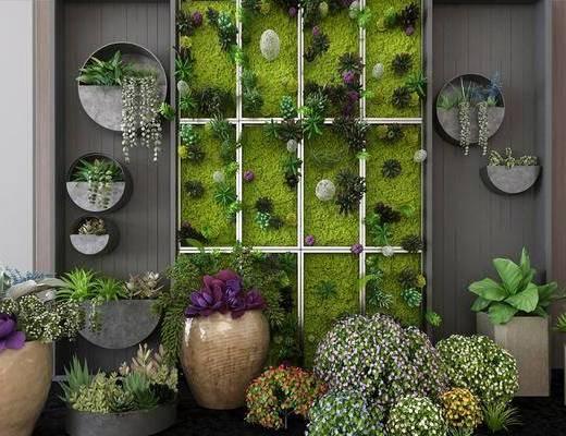 植物盆栽, 植物墙, 绿植植物, 花瓶花卉, 现代