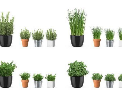 植物花卉, 盆栽, 北欧