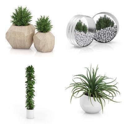 花瓶, 花卉, 植物, 盆栽, 绿植, 现代