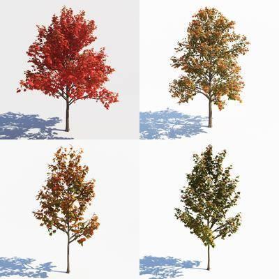 景观树, 树木, 绿植植物, 现代