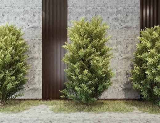 树木, 植物