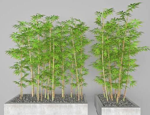 竹子, 植物, 盆栽